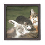Gatitos con la mamá cajas de recuerdo de calidad