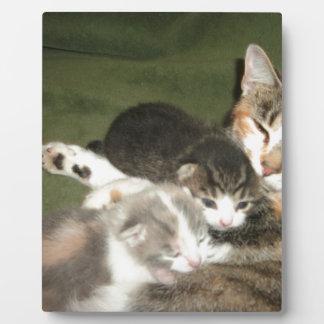 Gatitos con la mamá placa para mostrar