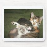 Gatitos con la mamá tapete de ratones