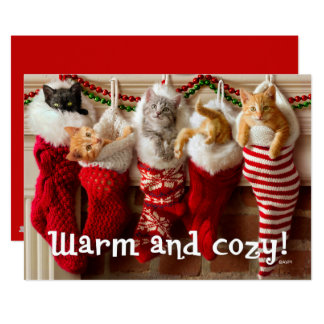 """Gatitos de encargo del navidad de la foto el   en invitación 5"""" x 7"""""""