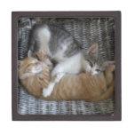 Gatitos de la abrazo caja de recuerdo de calidad