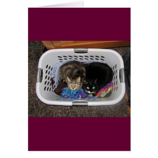 Gatitos de la cesta de lavadero tarjeta