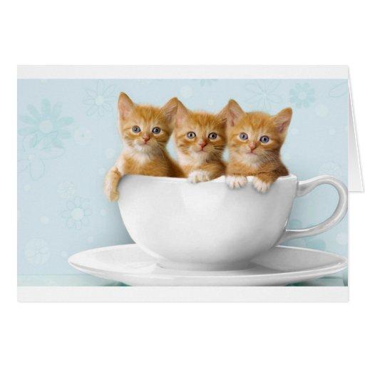 Gatitos de la taza de té tarjeta de felicitación