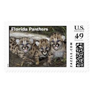 Gatitos de las panteras de la Florida Estampillas