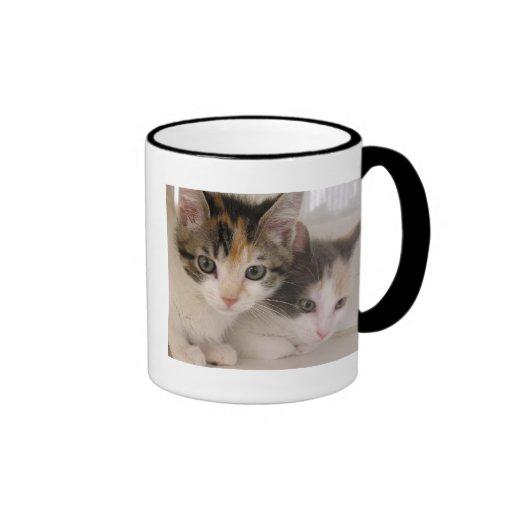 Gatitos del calicó tazas