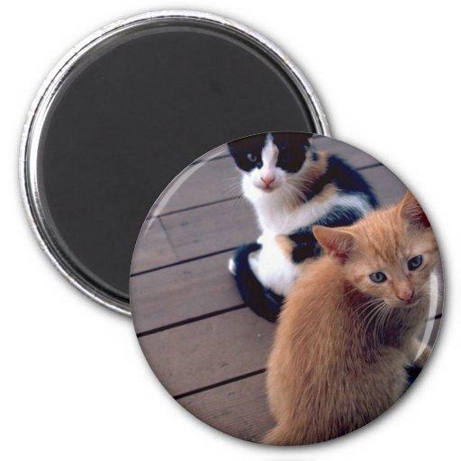 Gatitos del calicó y del naranja imanes