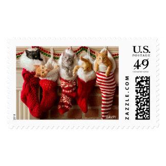 Gatitos del navidad en medias estampilla