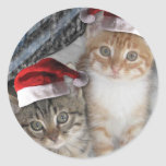 Gatitos del Tabby del navidad Pegatina