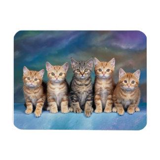 Gatitos del Tabby en un imán de la fila