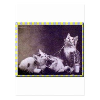 Gatitos e hilado postal