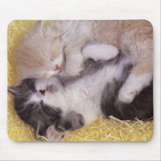 Gatitos el dormir tapete de ratones