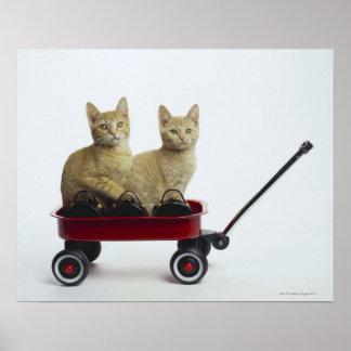 Gatitos en carro poster