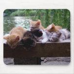 Gatitos en el embarcadero Mousepad Alfombrilla De Ratones