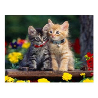 Gatitos en el jardín postal