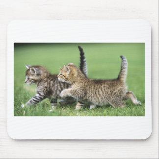Gatitos en el vagabundeo alfombrilla de ratones