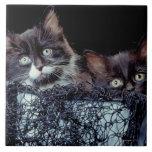 Gatitos en envase azulejo cerámica