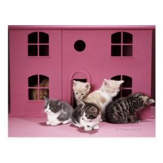 Gatitos en la casa de muñeca postales
