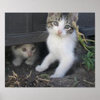 Gatitos en la granja poster