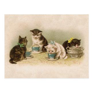 Gatitos en la postal del té
