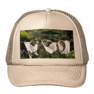 Gatitos en ropa interior en cuerda para tender la gorra