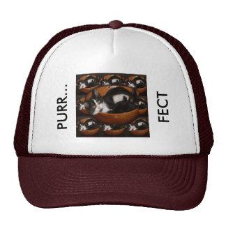 Gatitos en un cuenco con el modelo gorras de camionero