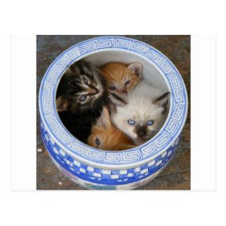 Gatitos en un plantador postales
