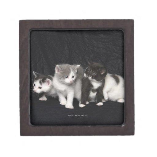 Gatitos en un tiro del estudio caja de regalo de calidad