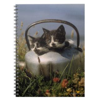 Gatitos en una caldera vieja libro de apuntes