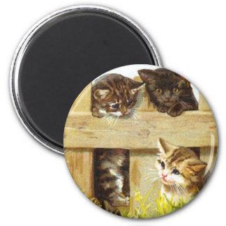 Gatitos en una cerca imanes