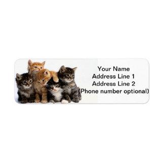 gatitos etiqueta de remite