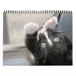 ¡Gatitos, gatitos! 2012 Calendarios De Pared