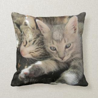 Gatitos lindos de la abrazo almohadas