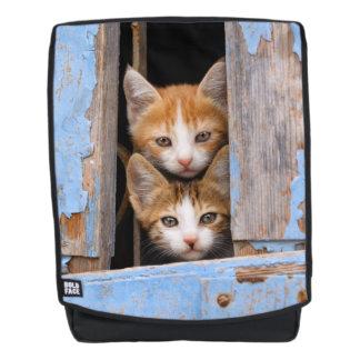 Gatitos lindos del gato en una negrilla azul de la