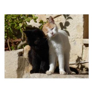 Gatitos lindos del negro y del blanco-naranja tarjetas postales