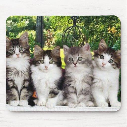 gatitos lindos en el jardín mouse pads