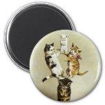 Gatitos lindos que juegan, humor de los gatos del imán redondo 5 cm