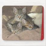 Gatitos mimosos alfombrillas de ratón