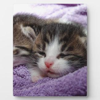 Gatitos mimosos placas con foto