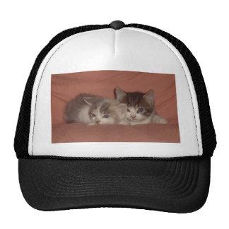 Gatitos minúsculos gorras