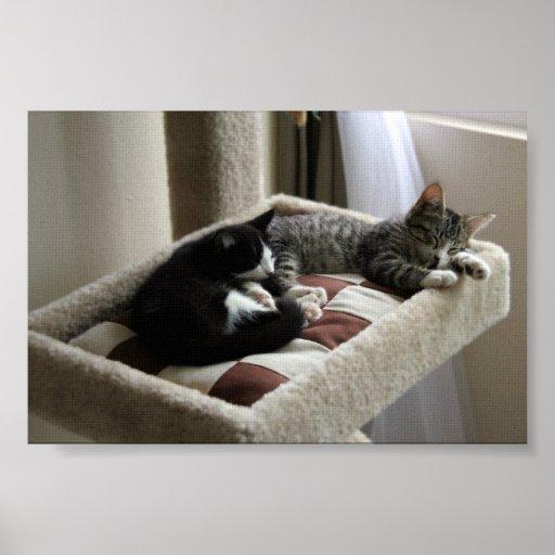 Gatitos Napping Impresiones