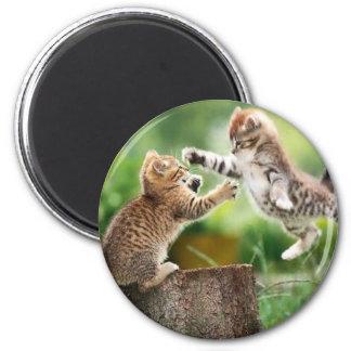 Gatitos noruegos del bosque imán redondo 5 cm