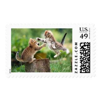 Gatitos noruegos del bosque sellos