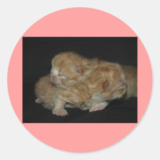 Gatitos persas recién nacidos adorables pegatina redonda
