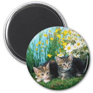 Gatitos preciosos 63 imán redondo 5 cm