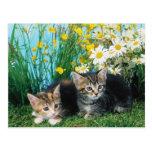 Gatitos preciosos 63 postales