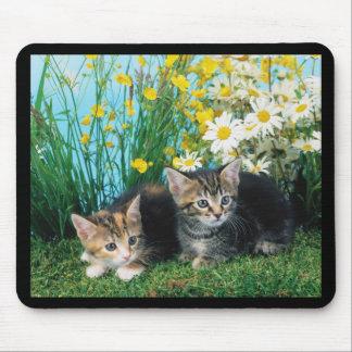 Gatitos preciosos 63 tapetes de ratón