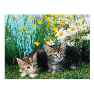 Gatitos preciosos 63 postal