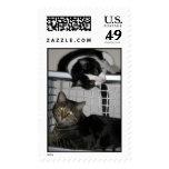 gatitos sellos