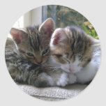 Gatitos soñolientos pegatina redonda