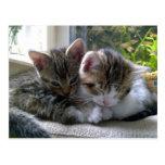 Gatitos soñolientos tarjeta postal
